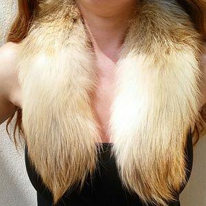 Genuine Fox collar